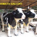 gambar harga patung sapi perah